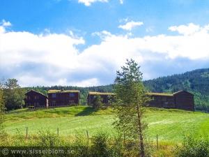 Fjellgård